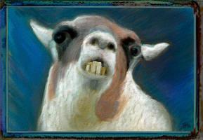 the Hallucinated Llama by fmr0
