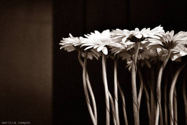 daisy's day by morze