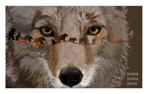 Coyote by reciprocated
