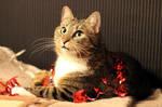 Christmas cat by pia-chu