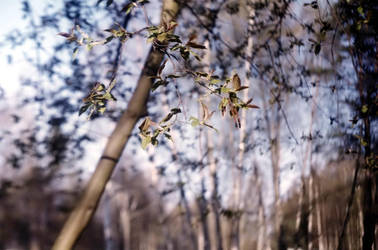 Spring time by Hameleon