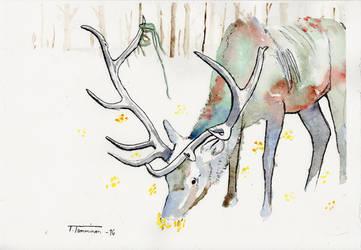Elk by PennyLame