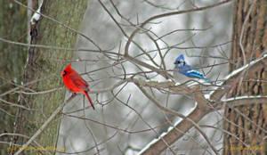 9586 N. Cardinal - Blue Jay by wtsecraig