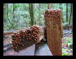 Ladybugs by woktiny