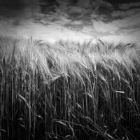 Einsamkeit by Wurstgulasch