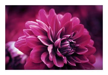 Blossom divine . by 999999999a