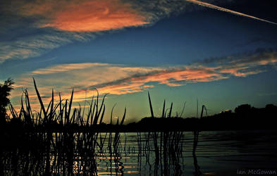 Ripples in the reeds . by 999999999a