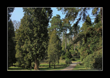 Bedgebury pinetum . by 999999999a