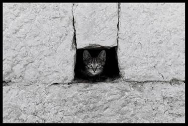 Cat wall by Zeljana