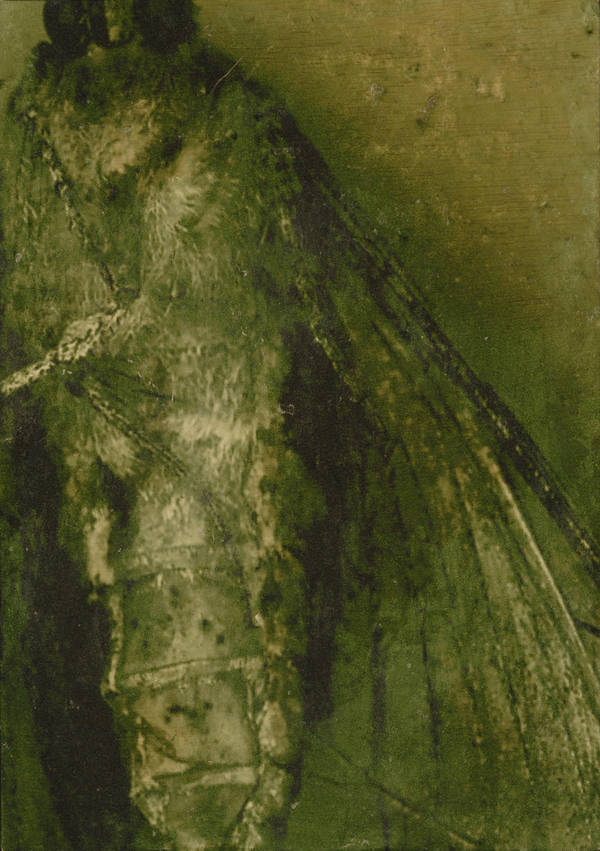 Moth of the Moss by moomiin