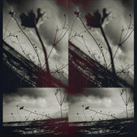 fiori? by mute-nOface