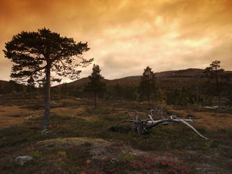 Borgefjell evening by Mycelius