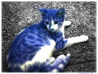 Blu Kat by lldct