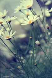 Unforgettable... by pacificdreams