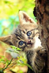 I Should Hide.. by pacificdreams