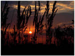 sunset 4 by mutrus