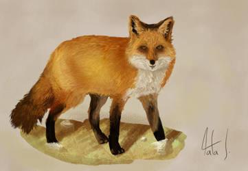 Fox by rafascheffer