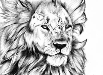 Lion Black Pen by Asten-94