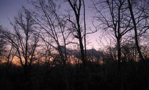 Back Yard Sunset by fartoolate