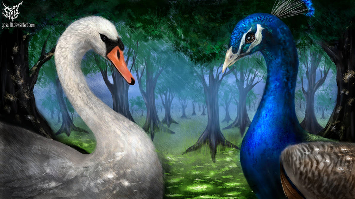 peacock and swan by gossj10
