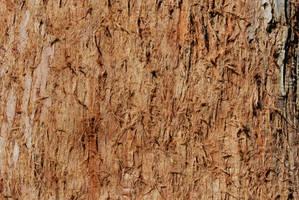 Tree bark 2-Stock by Thorvold-Stock