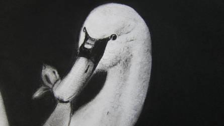 swan by selena2016