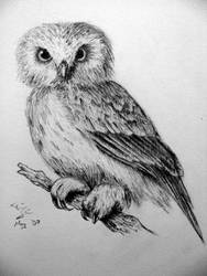 Detailed Owl by TheRealGerman