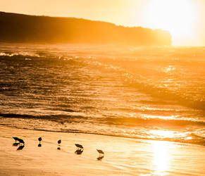 Sanderlings by StonyStoneIsStoned2