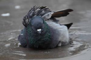 Taking a bath by melodi996