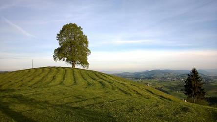 Freshly cut grass by Fukuchan-Ryoko