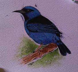 Sai Blue Bird by LearClow