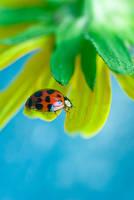 Ladybird by Sonny2005