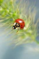 Ladybug II by Sonny2005