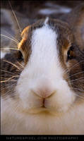 Bunny by Sonny2005
