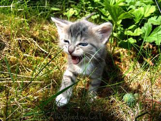 Little Roar by ToygerCat