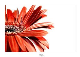 Flower by Klipeshnik