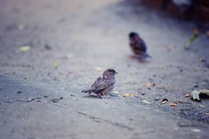 Sparrow II by ladyang