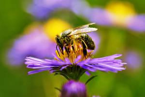 Bee III by ladyang
