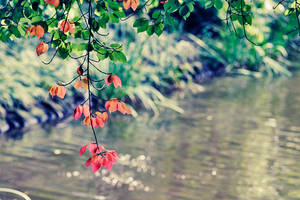 Red leaves II by ladyang