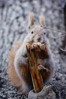 Squirrel III by ladyang