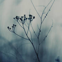 Blue dry lonely II by ladyang