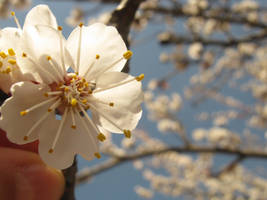 a little flower by Aricel