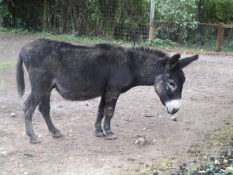 donkey Stock by TheOdddArtist