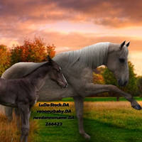 Palomino and Bay In A Sunset Field AVI by TheOdddArtist