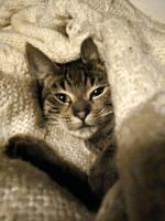 Bubi in the blanket by lotus82