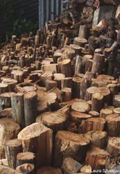 Wood Path by lotus82