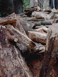 Wood by lotus82
