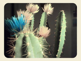 Cactus by lotus82