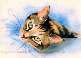 Cat watercolor by Drehli