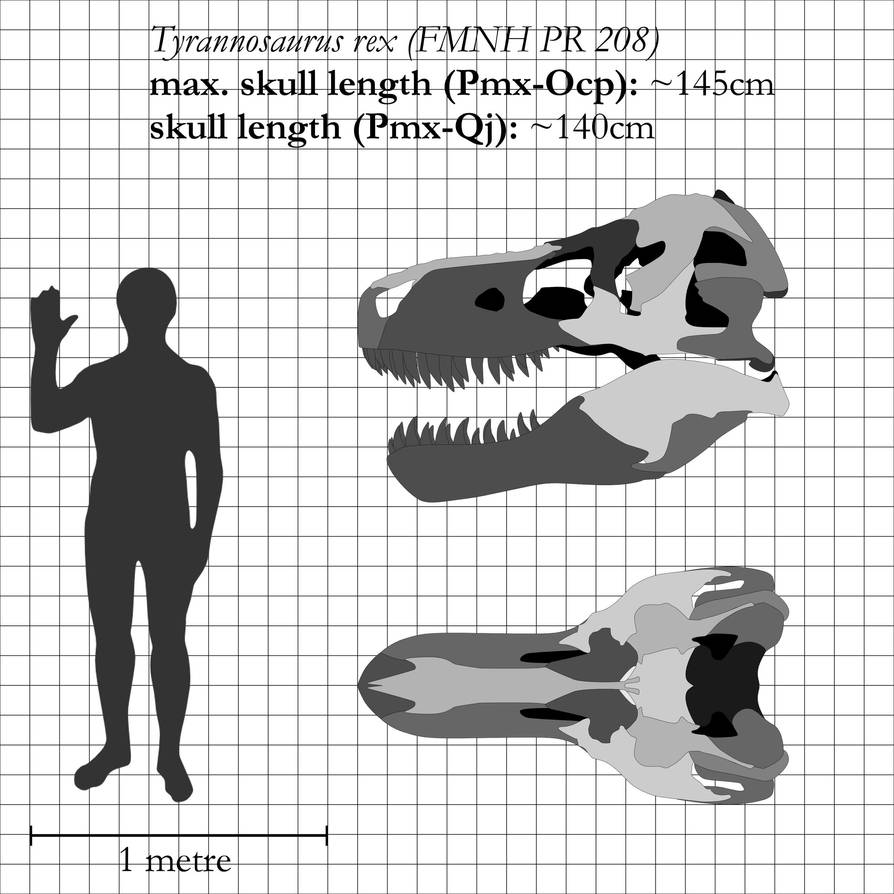 T. rex: the most iconic skull ever by theropod1